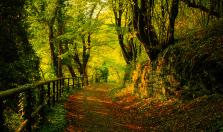 Autumn_Wallpaper_by_emats